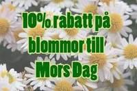 10% rabatt på blommor till Mors Dag