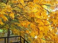 7 otroligt oktobriga presenter