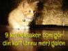 9 kattleksaker som gör din katt (ännu mer) galen