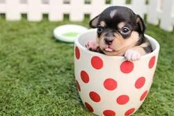 7 roliga leksaker att ge sin hund (i julklapp)