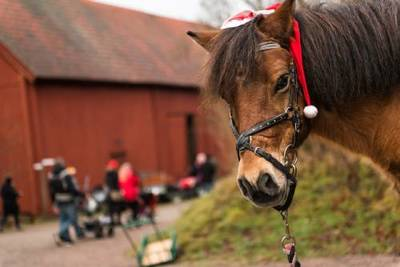Foto från Julmarknad på Nordens Ark