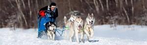 Hundspann för två - Heldagstur