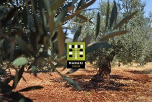 Ekologisk olivolja från eget träd