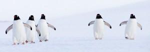 Resa till Antarktis