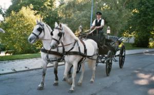 Häst- & picknickdag för två