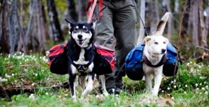 Husky Walk för två