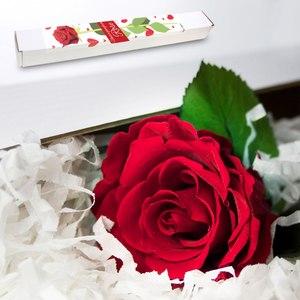 Ros som blommar för evigt